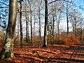 12 Buchen - panoramio.jpg