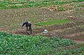 1394 - Nordkorea 2015 - von Nampo nach Käsong (22592604199).jpg