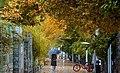 1399090218405099421663824 باران پاییزی در شیراز.jpg