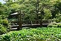 170811 Rokko Alpine Botanical Garden Kobe Japan29s3.jpg