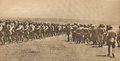1916 - Trupe romane in Dobrogea, fotografie din revista Le Miroir.png