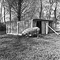 1960 domaine de Laizerie à Vaux sur Aure (Calvados)-10-cliche Jean Joseph Weber.jpg