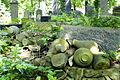 1 Cmentarz żydowski na Ślężnej. Foto Barbara Maliszewska.jpg