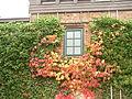 2008-10-19-niederfinow-23.jpg
