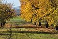 2011-11-06 11-33-13 Schaffhausen Gennersbrunn.jpg