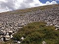 2013-07-14 11 44 33 More alpine tundra along the Wheeler Peak Summit Trail.jpg