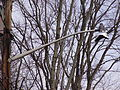 2014-12-30 12 43 40 Old incandescent street light fixture attached to a more modern support along Marquis Road in Ewing, New Jersey.JPG