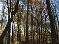 2015-11-15 09 54 49 Late autumn foliage in the woodlands along the West Branch Shabakunk Creek in Ewing, New Jersey.jpg