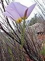 2016.04.23 07.38.51 DSC03639 - Flickr - andrey zharkikh.jpg