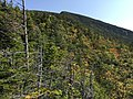 2017-09-11 11 05 00 View east-northeast from the Maple Ridge Trail at about 3,020 feet above sea level on the western slopes of Mount Mansfield within Mount Mansfield State Forest in Stowe, Lamoille County, Vermont.jpg