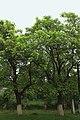 21-102-5002 Берегівський дендропарк.jpg