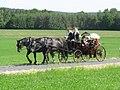 21te Rammenauer Schlossrundfahrt der Pferdegespanne (039).jpg