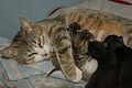 5-day-old kittens 05.jpg