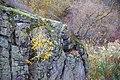 71-218-5013 Tiasmyn Canyon DSC 3174.jpg