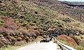 A@a shepherd Mega Livadi Serifos Greece - panoramio.jpg
