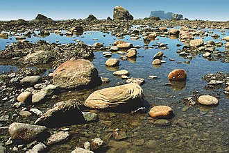 Olympic National Park - Tide pools form at low tide