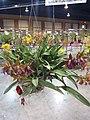 APOC 12 - orchid exibition in Bangkok (2016) (27412415176).jpg