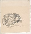 A Cat Curled Up, Sleeping MET DP807593.jpg