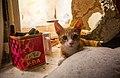 A cat in communal flat in Saint Petersburg-2.jpg