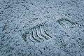 A footprint in the snow (Unsplash).jpg
