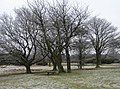 A frosty Coombe Hill - geograph.org.uk - 1196887.jpg
