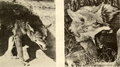 A survey of the red wolf (Canis rufus) 1972 fig. 4.png