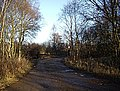 A track into Cleary Wood - geograph.org.uk - 1615003.jpg