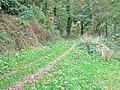 A track off a path in Physgill Glen - geograph.org.uk - 1552378.jpg
