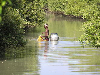 Muthupet - Image: A traditional canal fisher