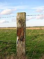A well-weathered fence post - geograph.org.uk - 666453.jpg