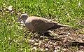 Ab bird 004.jpg