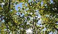 Acheloos trees.jpg