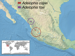 Adelophis sp. distribution.png