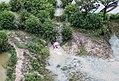 Aerial Ratargul.jpg