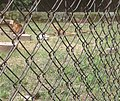 Agodi Garden Ibadan29.jpg