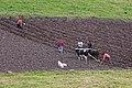 Agriculture in Ecuador 02.jpg