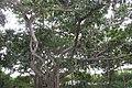 Al lado de Pasacaballo - panoramio (2).jpg