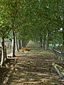 Allée de platanes classée monument historique.jpg