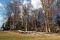 Almesbrunnberg, summit area.jpg