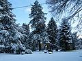 Alter Friedhof Eitorf Übersicht im Winter.JPG