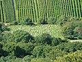Am Fuße des Hohenneuffen - panoramio.jpg