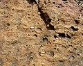 Andesitiese basalt, Hekpoort-formasie, a, Faerie Glen NR.jpg