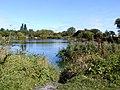 Angling Club pond near Sherburn in Elmet - geograph.org.uk - 54607.jpg