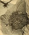 Animal life in the sea and on the land (1887) (14594200257).jpg