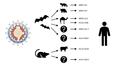 Animal origins of human coronaviruses.png