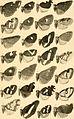 Annalen des Naturhistorischen Museums in Wien (1898) (18012628450).jpg