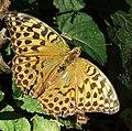 Annecy - butterfly.jpg