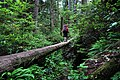 Another day in Canada. West Coast Trail, Vancouver Island, BC, Canada (6404631935).jpg