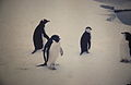 Antártida. Década de 1970. 58.JPG