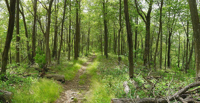 File:Appalachian Trail near top of Snowbird Mountain - Flickr - pellaea.jpg